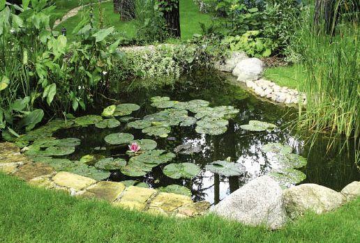 Oczko wodne rośliny