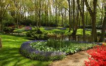 Rośliny do ogrodu. Jakie gatunki roślin posadzić w cieniu pod drzewami?