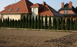 Wapnowanie gleby jesienią. Poprawianie jakości ziemi w ogrodzie
